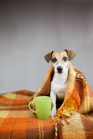 Adorable dog Jack Russell terrier and cup of tea