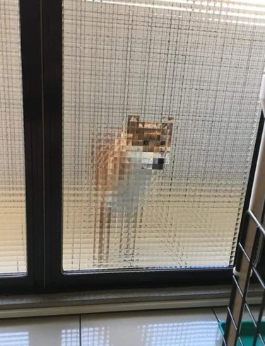 Dog looks pixelated behind textured glass