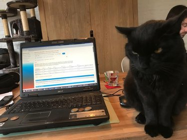 cat sits next to open laptop