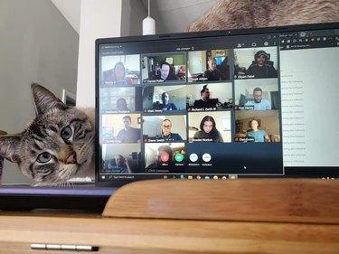 cat peers around laptop