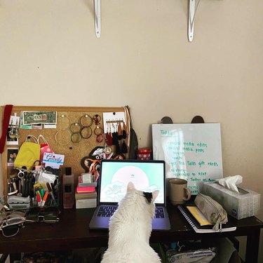 cat stares at computer