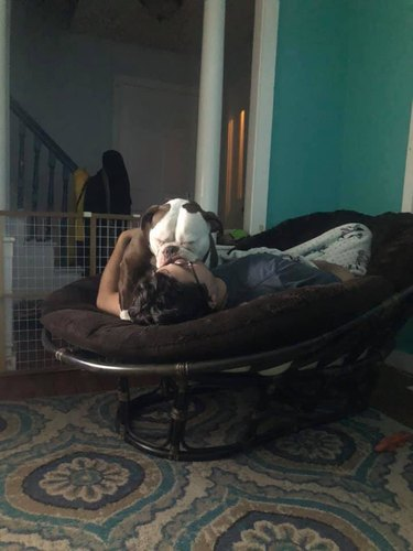 bulldog sleeps on person