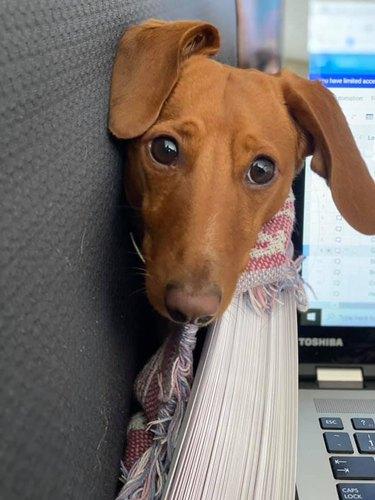 dog wants to help