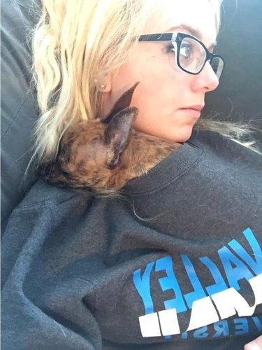 dog sleeps in woman's sweater
