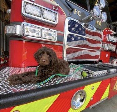 dog lying by firetruck