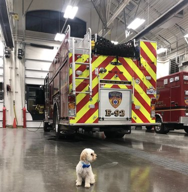 tiny dog in front of firetruck