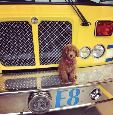 dog sitting on firetruck