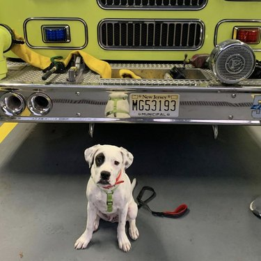 dog in front of firetruck
