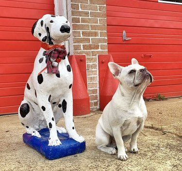 dog sitting next to dalmatian statue
