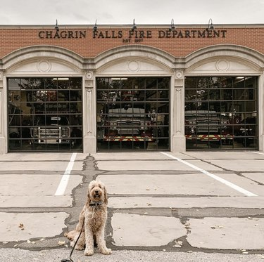 dog in front of fire station