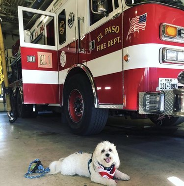 dog lying down by firetruck