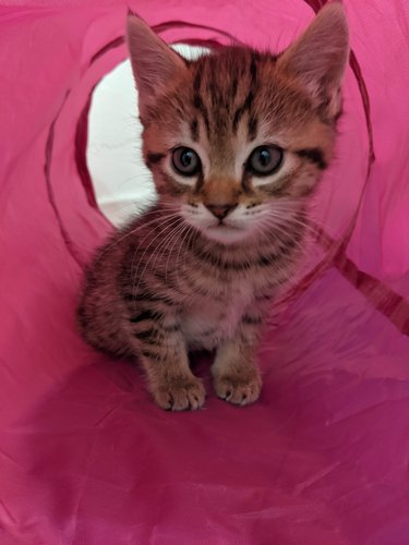 a small kitten in a tube