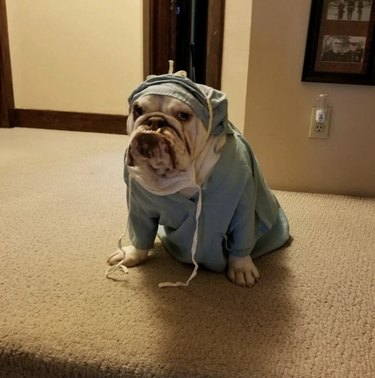 dog in doctor's costume
