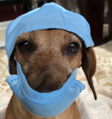 dog in surgeon's mask