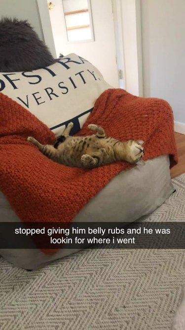 cat sleeps on back