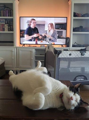 sleepy cat sleeps in front of TV