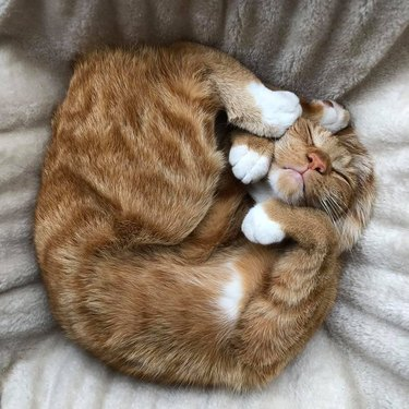 cat sleeps tight in fetal position with paws to face