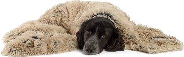 Best Friends by Sheri Throw Shag Dog & Cat Blanket