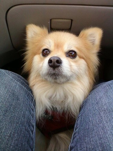 Dog sitting at feet of person in car's front passenger seat.