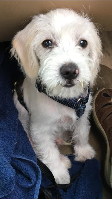 Puppy sitting at feet of person in car's front passenger seat.