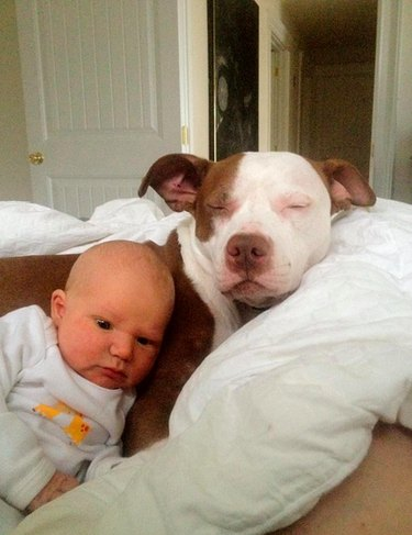 Baby cuddling with pit bull.
