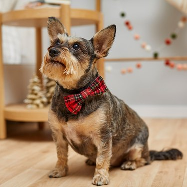 Holiday Dog & Cat Bow Tie