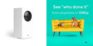 Watch pets remotely with Wyze 1080p HD Pet Cameras