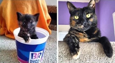 before & after picture of cat