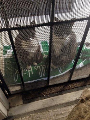 cats wait outside door