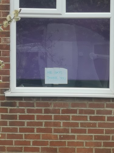 woman posts sign in window for neighbor's cat