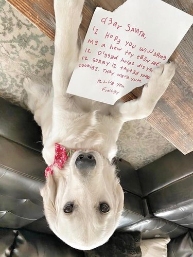 dog writes letter for santa, apologizes for eating cookies