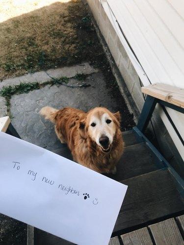 dog writes letter for neighbor