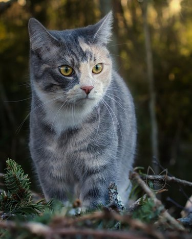 Cat in the outdoors