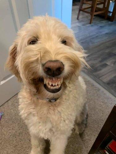 dog smiles for camera