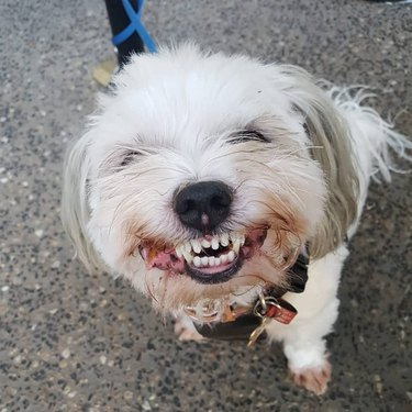 dog smiles for treat