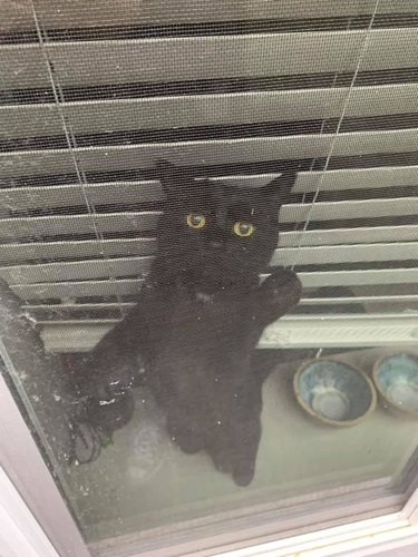 black cat is sad when human leaves for work
