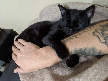 black cat holds onto arm