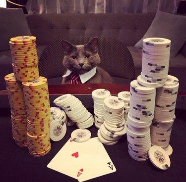 Cat wearing necktie sitting at blackjack table.