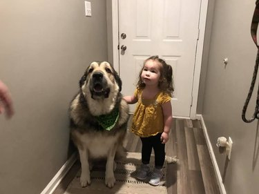 big dog guards toddler