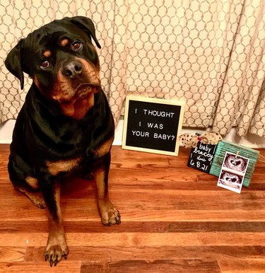 disappointed dog poses with letterboard