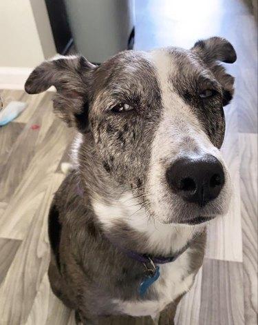 dog squints in disbelief