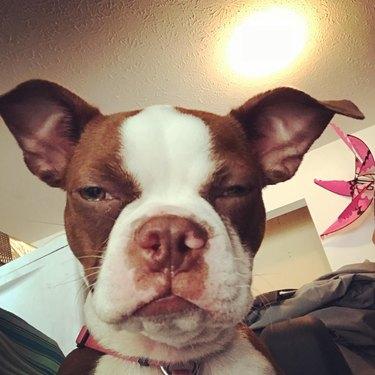 dog is not happy