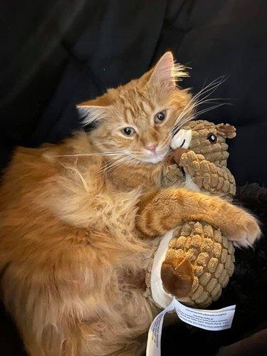 cat holds plush otter