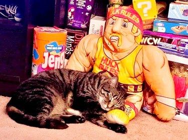 cat sleeps on Hulk HOgan doll