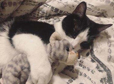 cat sleeps with stuffed animal