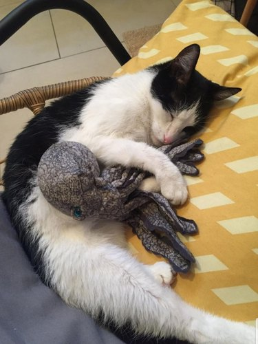 cat snuggles with toy octopus