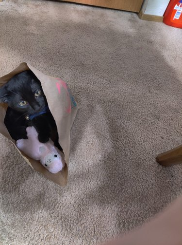 cat in bag holds favorite toy