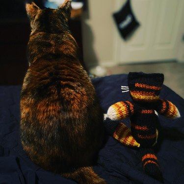 cat watches tv with favorite toy