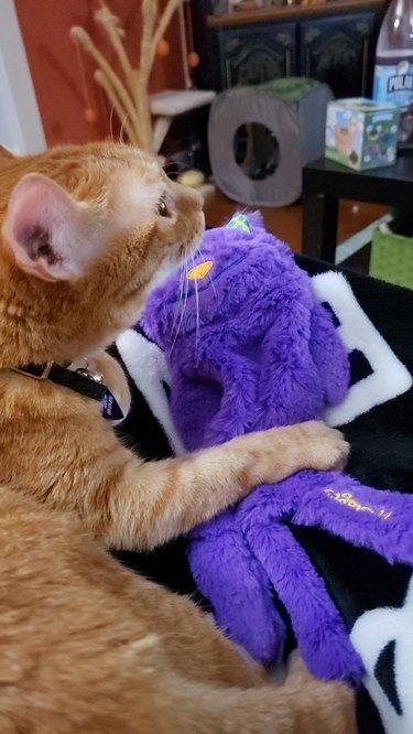 cat holds stuffed animal