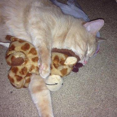 cat sleeps with plush giraffe